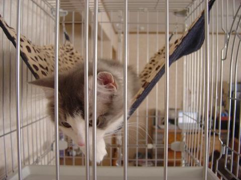 ニャンモックフレイ(2009.03.07)