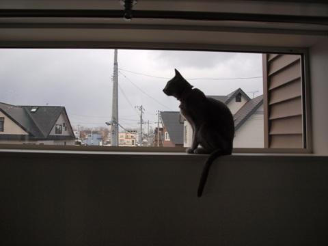窓辺の二コ01(2009.03.20)