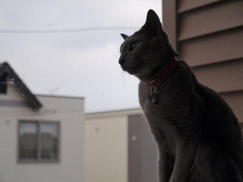 窓辺の二コ02(2009.03.20)