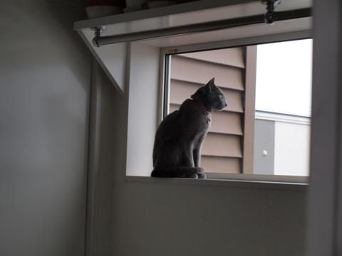 ニコライの窓01(2009.03.20)