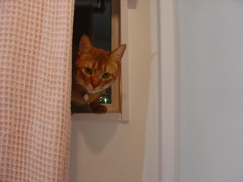 誰の窓?01(2009.03.25)