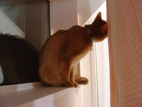 誰の窓?03(2009.03.25)