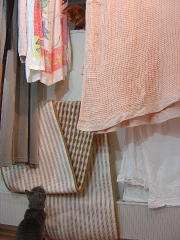 誰の窓?06(2009.03.25)
