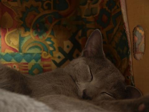 ニコライハウスで(2009.03.29)