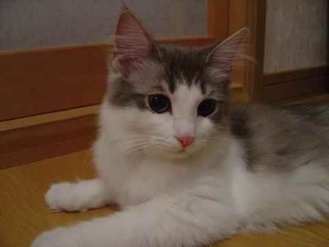 おすましフレイヤ(2009.03.31)