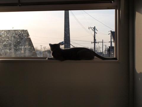 ニコライの窓06(2009.04.11)
