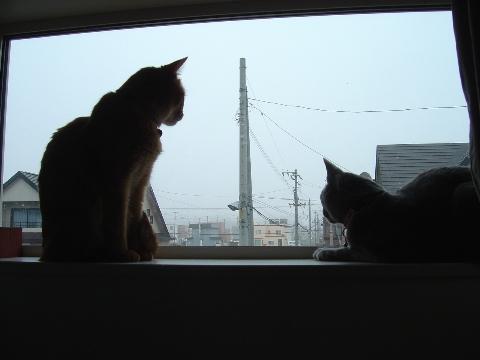 いっしょにお外見01(2009.04.15)