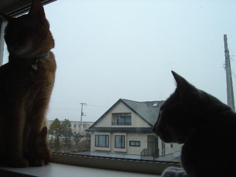 いっしょにお外見02(2009.04.15)