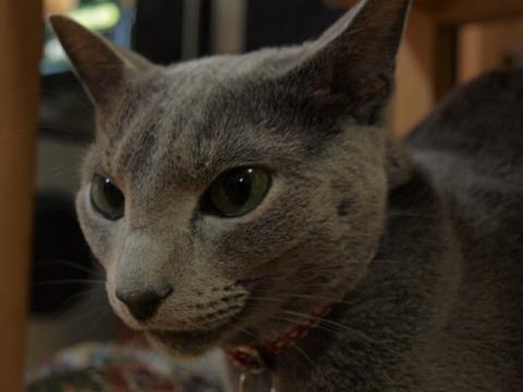 ニコ(2009.04.22)