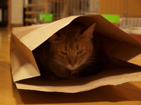 袋ねこジョゼ01(2009.04.23)