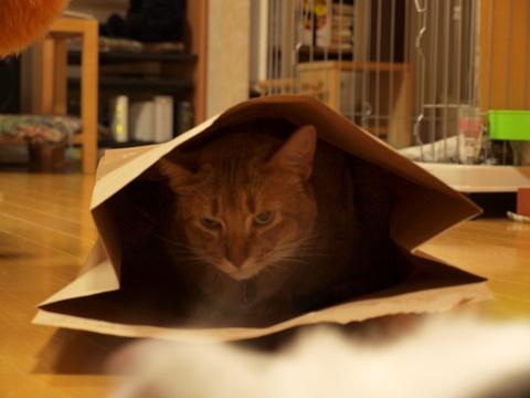 袋ねこジョゼ02(2009.04.23)