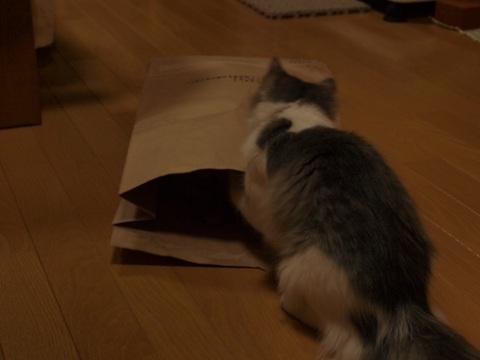 袋ねこジョゼ04(2009.04.23)