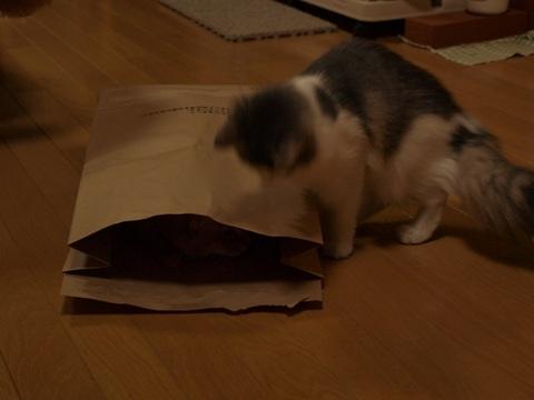 袋ねこジョゼ05(2009.04.23)