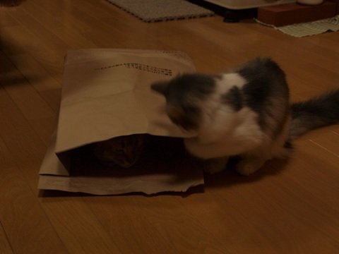 袋ねこジョゼ06(2009.04.23)