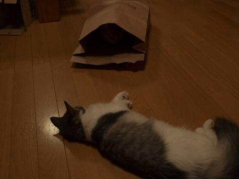 袋ねこジョゼ07(2009.04.23)