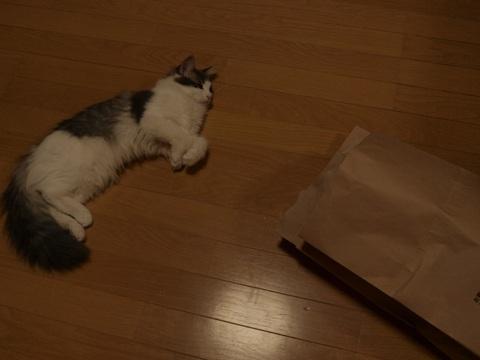 袋ねこジョゼ08(2009.04.23)