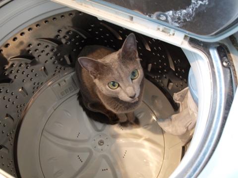 さよなら洗濯機06(2009.04.26)