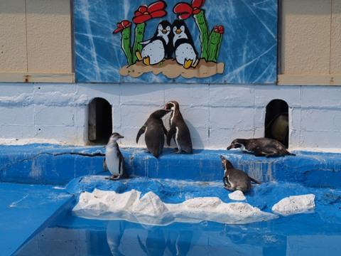 ペンギンさん(2009.05.02)
