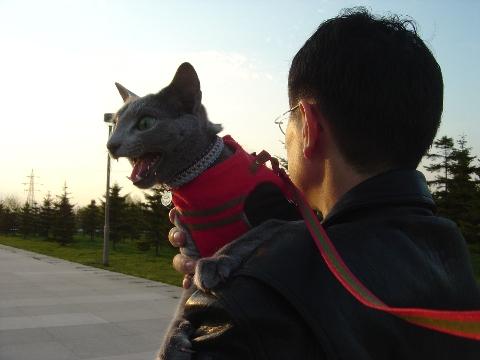 太陽ににゃーん(2009.05.03)