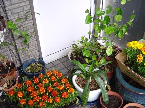 花いっぱい!(2009.05.05)