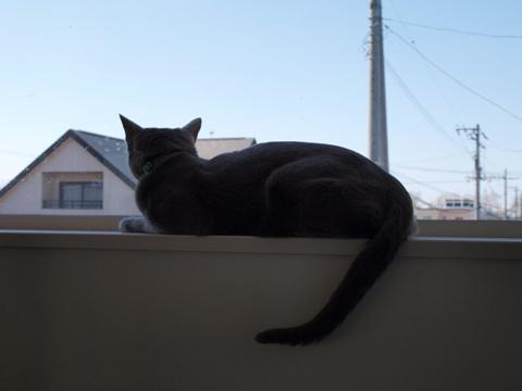 ニコ窓の二コ02(2009.05.06)