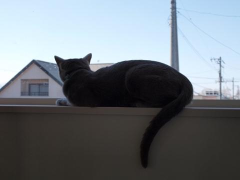 ニコ窓の二コ03(2009.05.06)