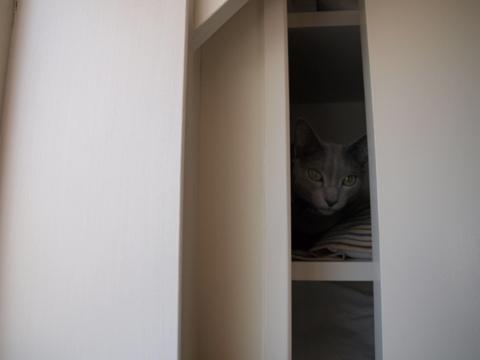 寝るにゃん03(2009.05.06)