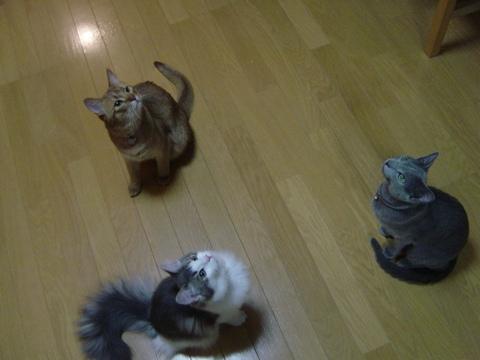 3にゃん♪(2009.05.10)