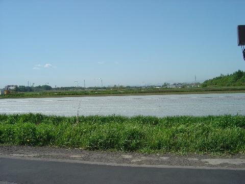 春のレタス畑(2009.05.20)