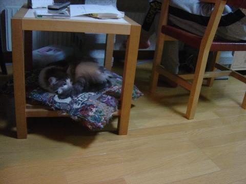 おとーにゃんコ、フレイはここ(2009.05.22)