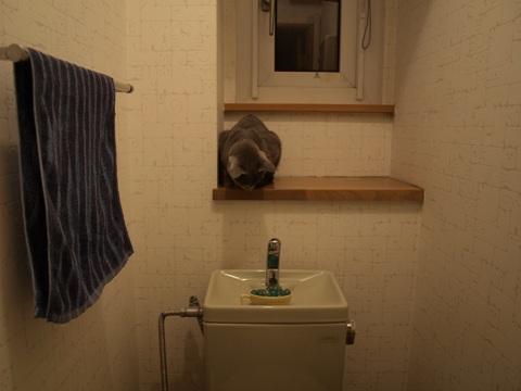 トイレのニコ01(2009.06.02)