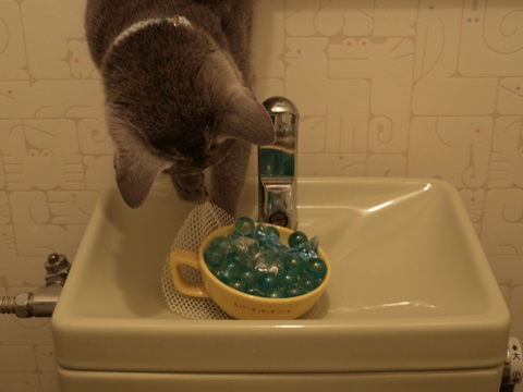 トイレのニコ05(2009.06.02)