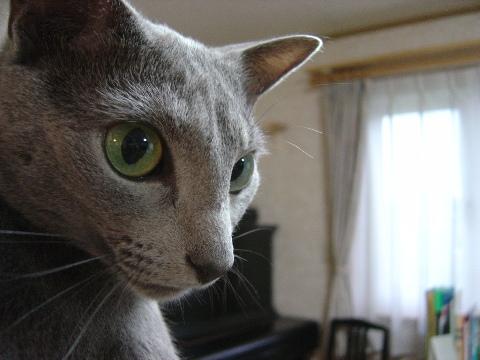 ご満悦(2009.06.10)