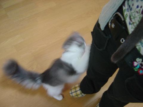 フレイヤもでしゅ(2009.06.10)