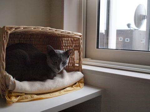 窓辺なんだにゃ...(2009.06.13)