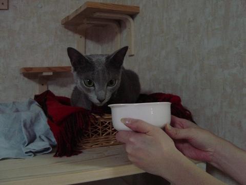 イタレリツクセリ01(2009.06.17)
