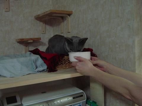 イタレリツクセリ02(2009.06.17)