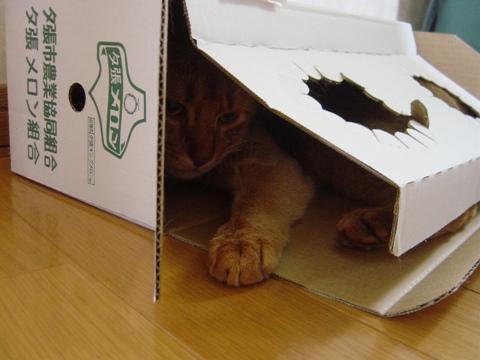 ジョゼとメロン箱02(2009.06,17)