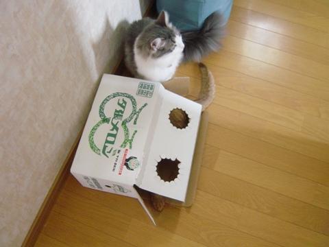 ジョゼとメロン箱05(2009.06,17)