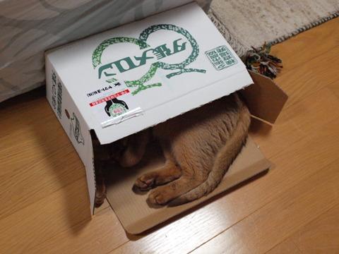 ジョゼとメロン箱03(2009.06,18)