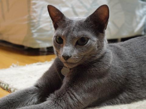ふふん(2009.06.22)