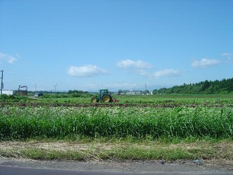 6月のレタス畑(2009.06.24)
