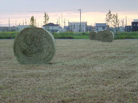 またまた牧草ロール(2009.07.06)