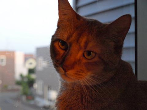 夕陽に染まる(2009.07.08)