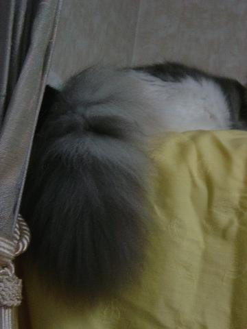 コレナニ?(2009.07.12)