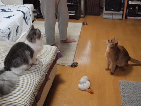 夢中!(2009.07.06)
