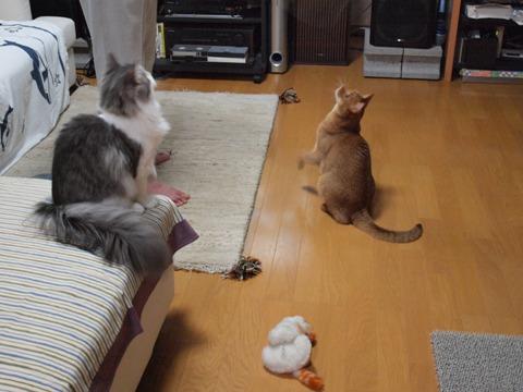 夢中です(2009.07.06)
