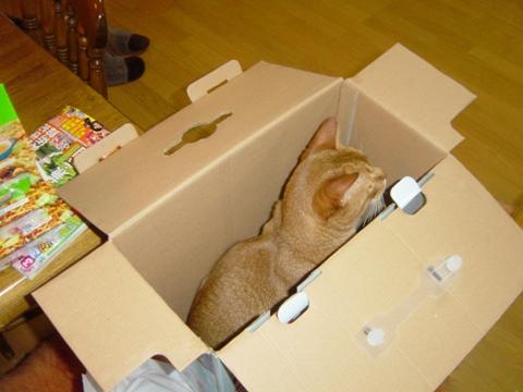 箱好きにゃんず01(2009.07.19)