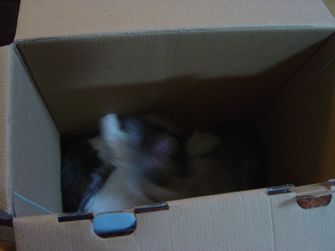 箱好きにゃんず04(2009.07.19)