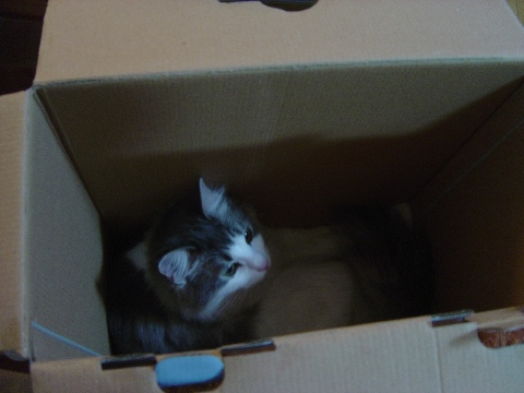 箱フレ02(2009.07.19)